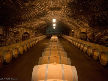 Visit to Concha y Toro Vineyard + Chilean Lunch – 1 Half Day Tour
