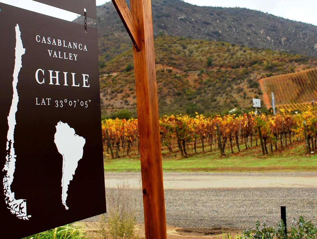 Visit two Vineyards of Casablanca valley & Chilean Lunch – 1 Full Day Tour