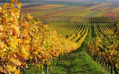 Visite diferentes Vales de Vinhos – 4 Dias