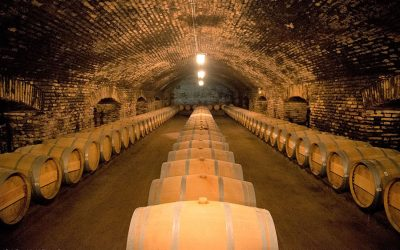 Concha y Toro Vineyard – Half Day